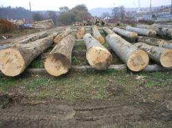 Drevo sv, s.r.o. - nákup, predaj, spracovanie dreva